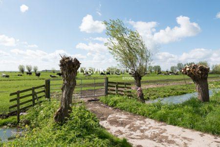 Polderlandschap met hek en bewolkte lucht in de omgeving van De Donk, Brandwijk