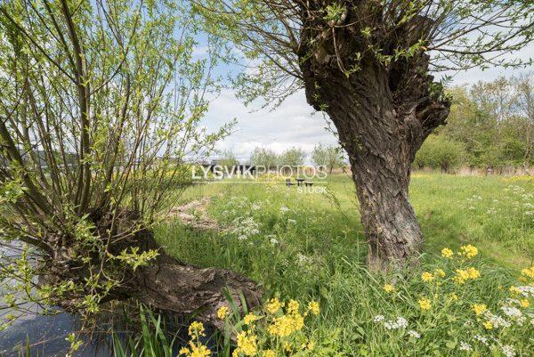 Doorkijkje tussen twee wilgen bij de brug over het riviertje de Alblas