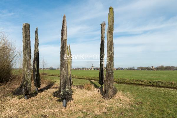 Veeneiken uit de polder Alblasserwaard