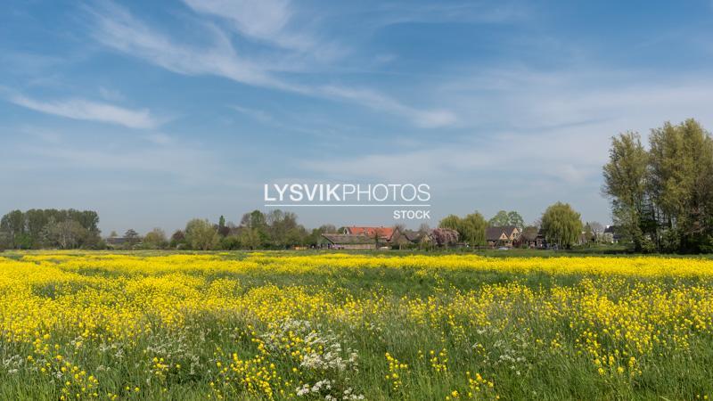 Polderlandschap bij Hoornaar [D810188]