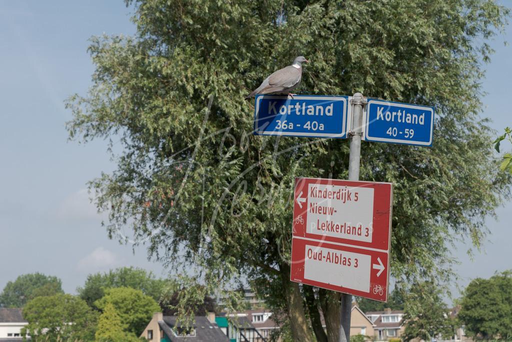 Straatnaambord Kortland D8102127