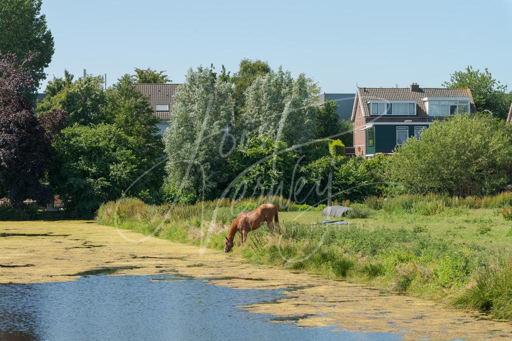 Dijkwoningen aan de Matena 14 – 18 in Papendrecht D8E034414
