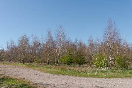 bomen bij Slingelandse plassen