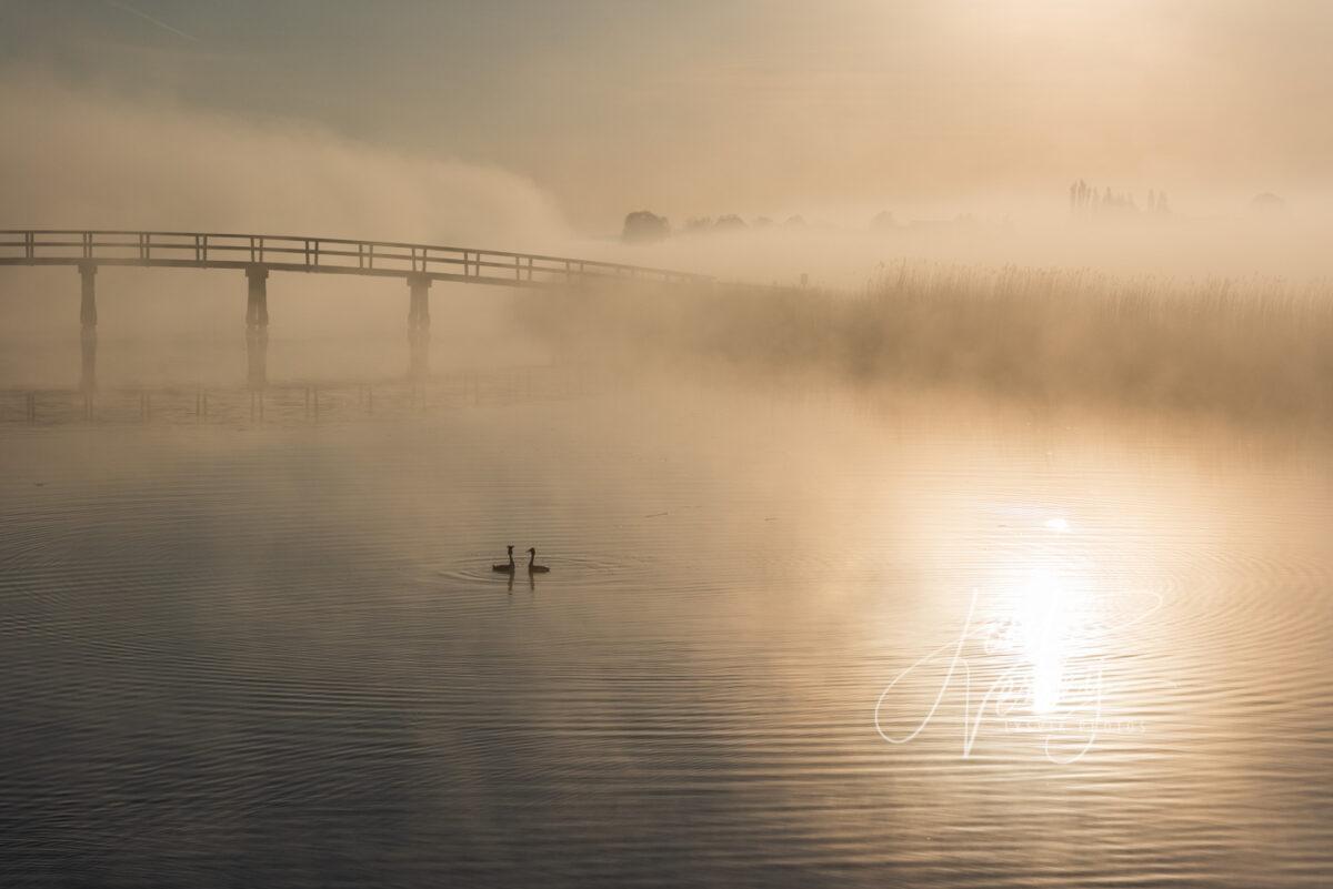 Koppel futen bij zonsopkomst in mistig landschap