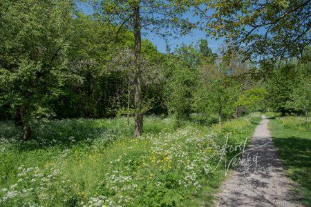 Wandelpad in Alblasserbos