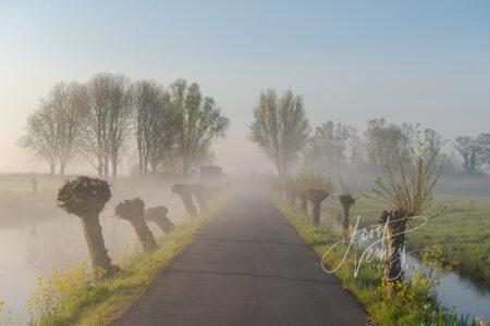 Fietspad in mistig polderlandschap
