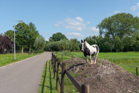 Paard langs het Oosteinde