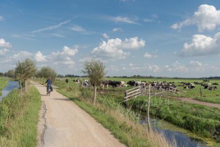 Fietser op Tiendweg met koeien in weiland