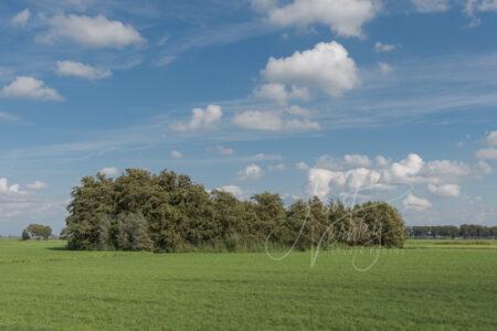 Groep bomen in polderlandschap
