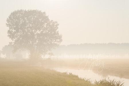 Boom in mistig polderlandschap