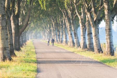 Laan met bomenrij en fietsers