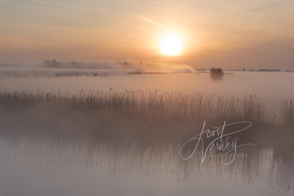 Gouden gloed in mistig polderlandschap