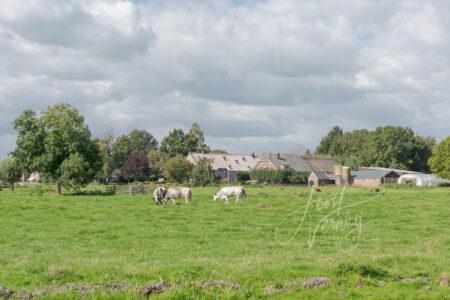 Poldergezicht met boerderijen in Ottoland