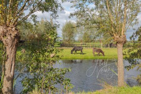 Doorkijkje naar twee ezels in poldergebied
