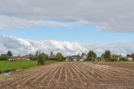 Poldergezicht met maisveld