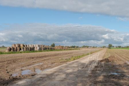 Polderlandschap achter Tienhoven