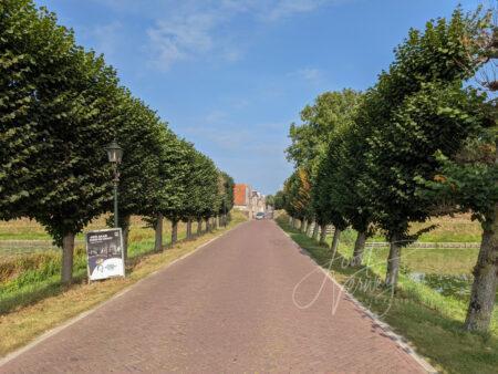 Nieuwpoortseweg met bomenrij