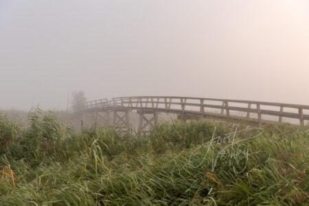 Oude Donkse brug in Donkse Laagten