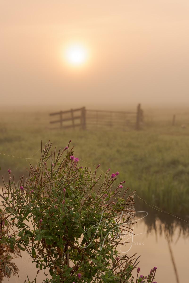 Zonsopkomst in een mistig polderlandschap